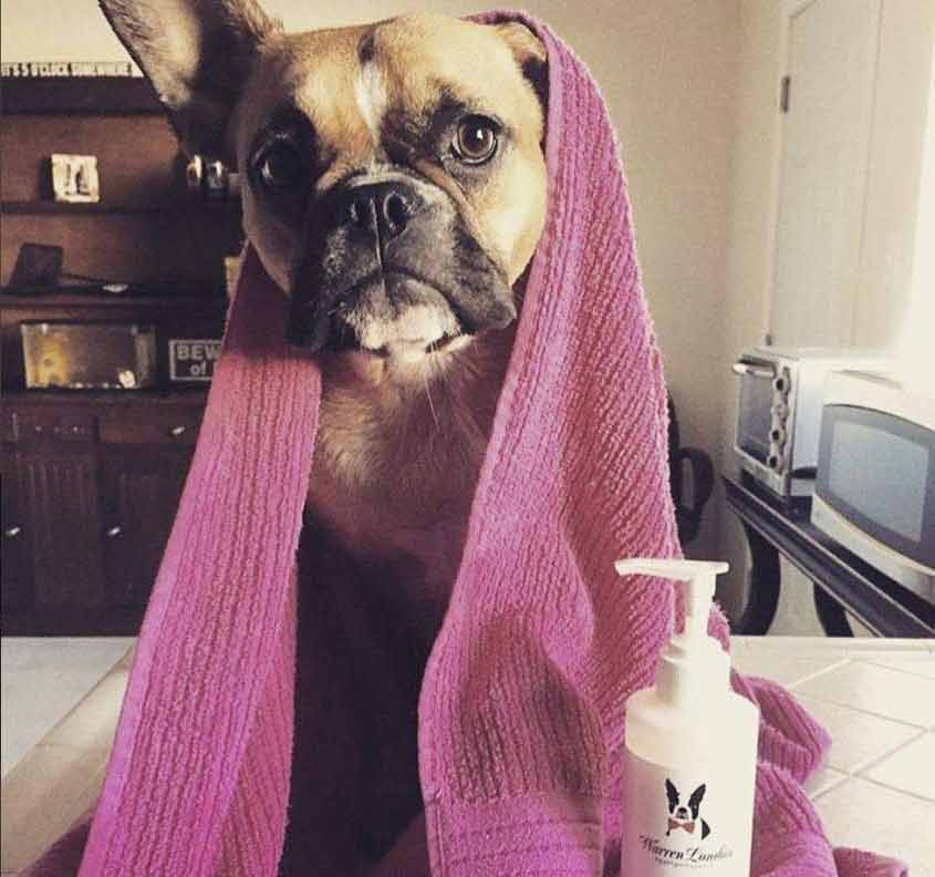 Best Dog Conditioners