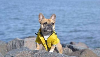 The 11 Best Dog Raincoats In 2021