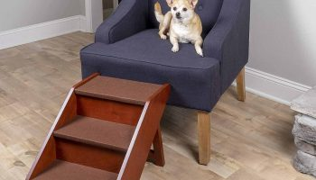 The 11 Best Pet Stairs In 2021