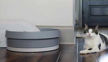 Top 11 Best Automatic Litter Boxes 2021