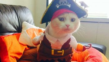 Top 11 Best Cat Costumes For 2021